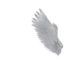 Warhammer 40k Bitz: Dark Eldar Harpyien Flügel C2 - Rechts